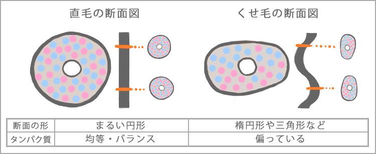 直毛の断面はまるい円形で、タンパク質は均等にバランスが取れています。一方くせ毛は断面が楕円や三角形になっており、タンパク質のバランスも偏っています。
